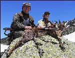 Охота на кавказскую серну в горах Абхазии