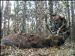 Осенняя охота на пятнистого оленя