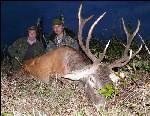 Трофейная охота на благородного оленя в Белоруссии