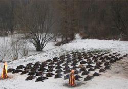 Охота зайц в венгрии